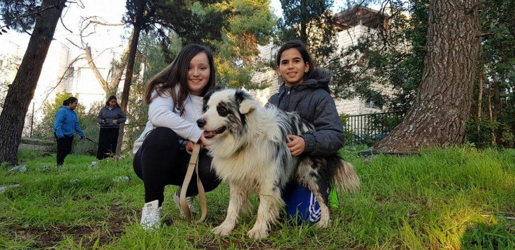 פרויקט כלב אל לב