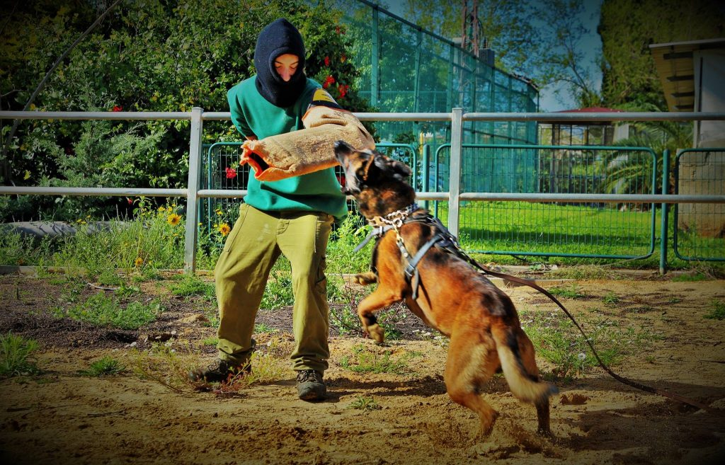 אילוף בדרך אחרת כלבי בטחון