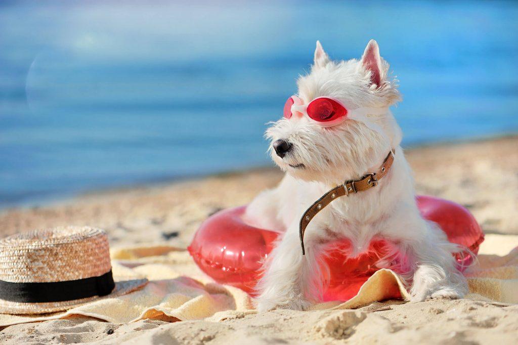 כלב בחוף ים - פעילות כלבנים לקייטנות קיץ